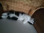 Prośba o dom dla kociaków