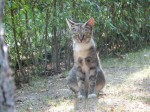 Szukamy lokum dla dwóch koteczek
