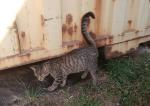 Potrzebny dom dla kociego miziaka