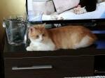 Pixo zamieszkał w domu tymczasowym