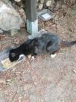 Prosimy o pomoc dla kotów wolnożyjących