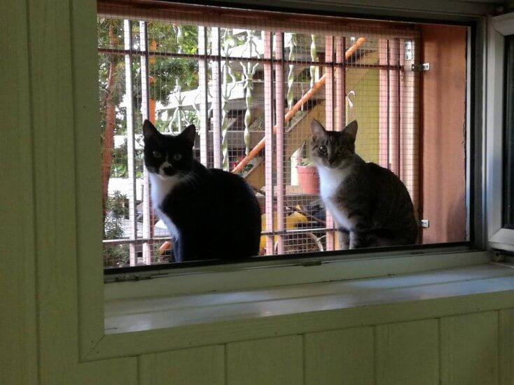Koci podopieczni zbierają na utrzymanie - zbiórka