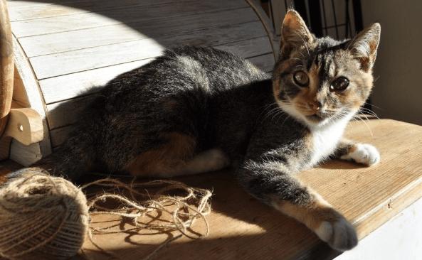Koteczka po wypadku pilnie potrzebuje operacji