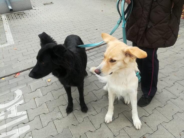 Klara i Bella - śliczne, młode sunie proszą o dom