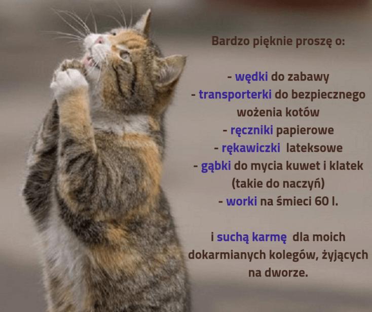 Fundacyjne koty proszą o wsparcie