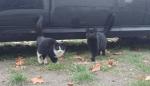 Potrzebna pomoc dla kotów!