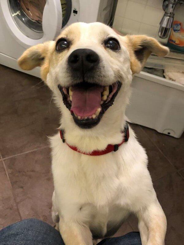 Uśmiechnięty Kodi