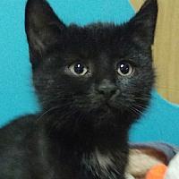 Pinia - kotka do adopcji