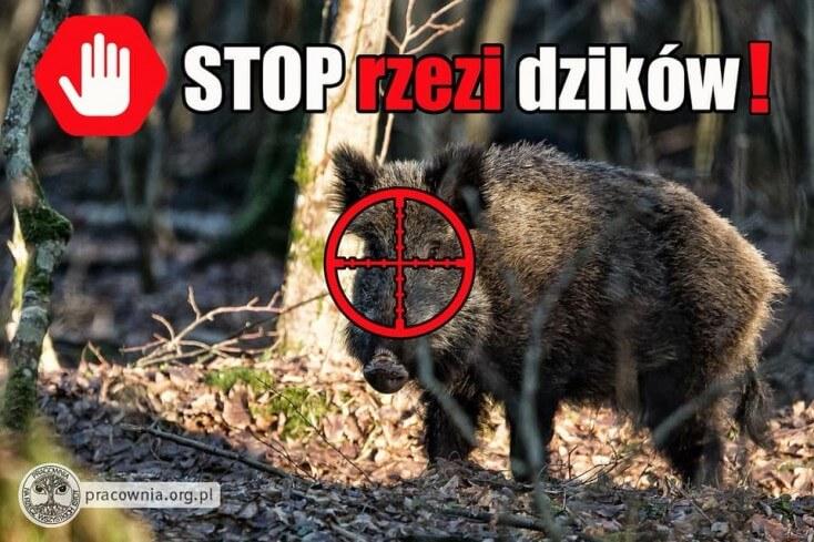 Stop rzezi dzików!