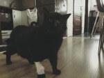 Puma z Konarzewa prosi o pomoc