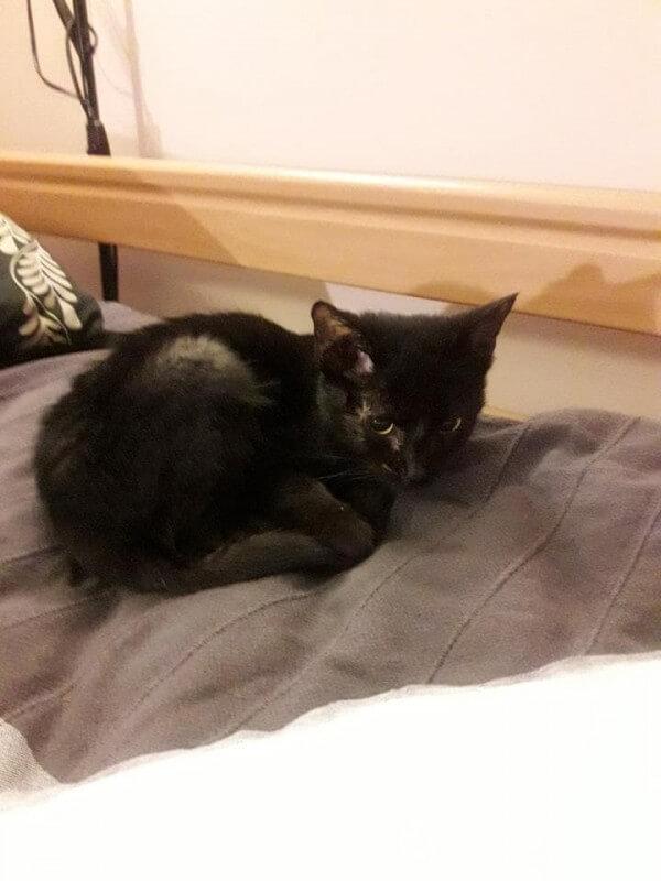 Kotek Lucek zbiera na leczenie