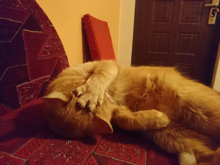 Szukamy domu dla kotka z FELV