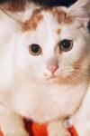 Żonkil - kotek z ulicy Żonkilowej