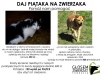 daj-piataka-na-zwierzaka04