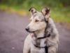 alfi-pies-do-adopcji-poznan-dopiewo