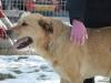 ball-idealny-pies-do-adopcji-poznan-10