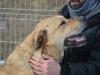 ball-idealny-pies-do-adopcji-poznan-2