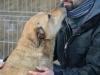 ball-idealny-pies-do-adopcji-poznan-3