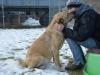 ball-idealny-pies-do-adopcji-poznan-5