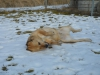 ball-idealny-pies-do-adopcji-poznan-6