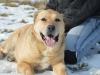 ball-idealny-pies-do-adopcji-poznan-9