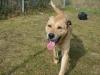 ball-pies-do-adopcji-poznan-11