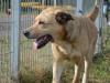 ball-pies-do-adopcji-poznan-2