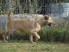 ball-pies-do-adopcji-poznan-9