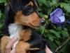 daszka-przed-adopcja-3