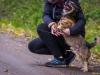 emil-maly-pies-do-adopcji-poznan-dopiewo-4