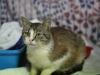 Frugo, kot do adopcji