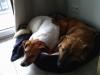 ina-pies-do-adopcji-poznan-dopiewo-2