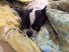 kiwi-pies-do-adopcji-poznan-dopiewo-3