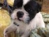 kiwi-pies-do-adopcji-poznan-dopiewo-4