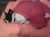 kiwi-pies-do-adopcji-poznan-dopiewo