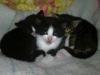 male-kotki-do-adopcji