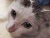 lasek-kot-do-adopcji-3
