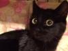 maja-kotka-do-adopcji-poznan-dopiewo-4