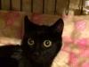 maja-kotka-do-adopcji-poznan-dopiewo