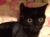 maja-kotka-do-adopcji-poznan-dopiewo_0