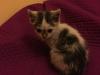 malory-kotka-do-adopcji-poznan-2