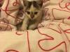 malory-kotka-do-adopcji-poznan-3