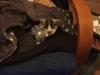 malory-kotka-do-adopcji-poznan-4