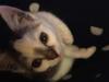 malory-kotka-do-adopcji-poznan-6