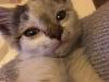malory-kotka-do-adopcji-poznan-7