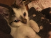 malory-kotka-do-adopcji-poznan-8