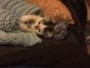 malory-kotka-do-adopcji-poznan-9