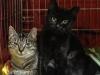 29.11.2015 r. Filipinka i Manila piękne kotki polecają się do adopcji.