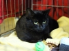 img_2279_r_small13.11.2015 r. Manila piękna czarna kotka do adopcji.