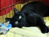 img_2293_r_small13.11.2015 r. Manila piękna czarna kotka do adopcji.